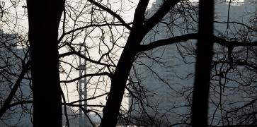 Митино сквозь деревья парка