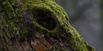 мохнатая дырочка