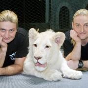 Братья Запашные с белым тигром, 2008